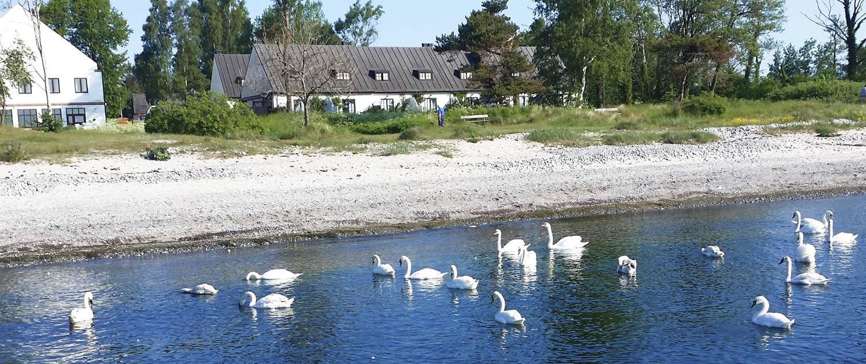 Vi har sju hus närmast stranden